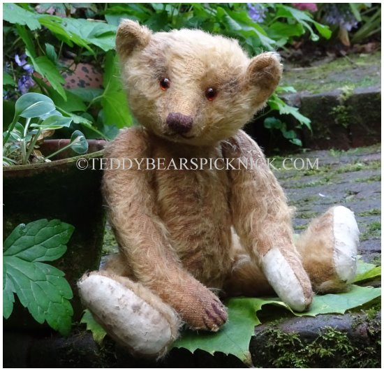 Forget me not bears Zooby